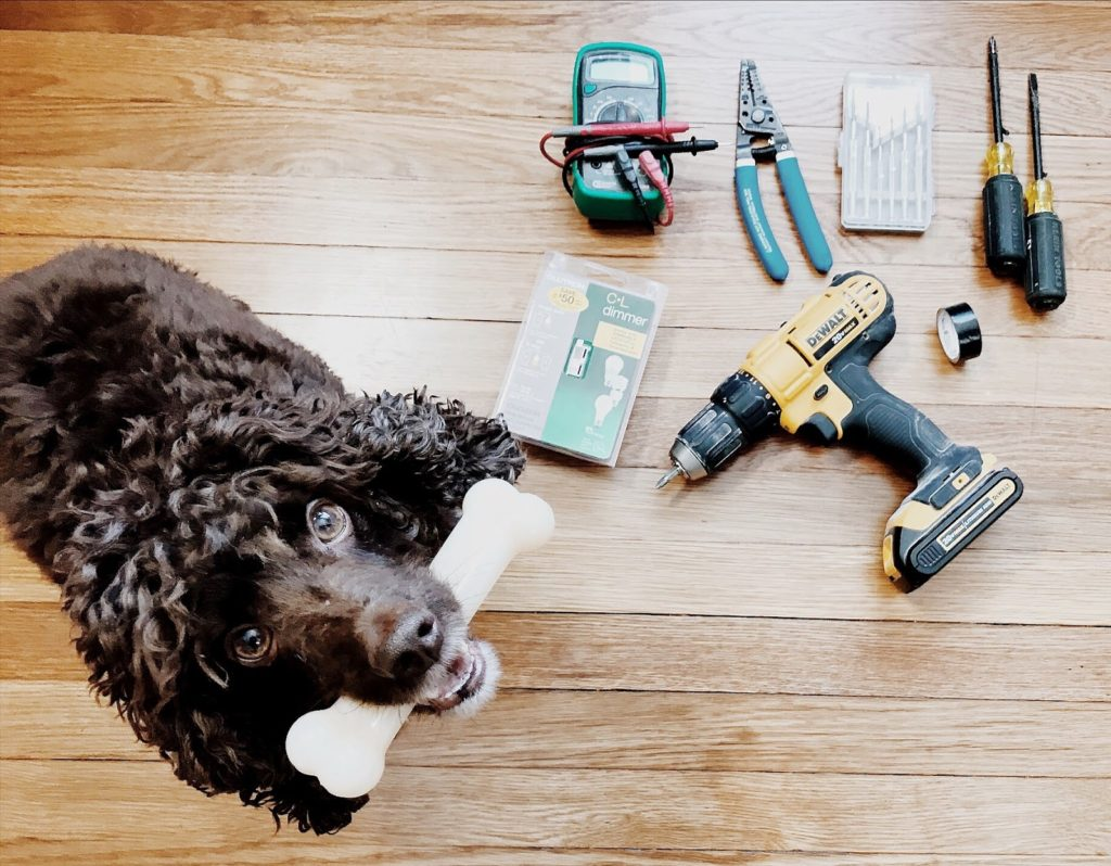 poodle holding a bone and sitting next to other tools