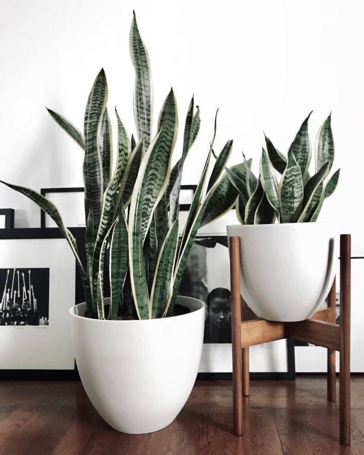 Plants in modern pottery