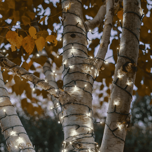 solar powered lights on a tree